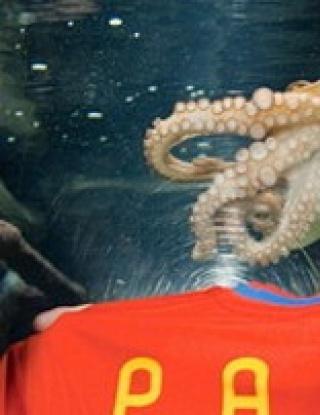 Двуглава костенурка заменя октопода Паул