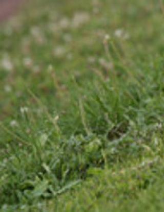 Разследват футболист за уриниране край флагчето за корнер
