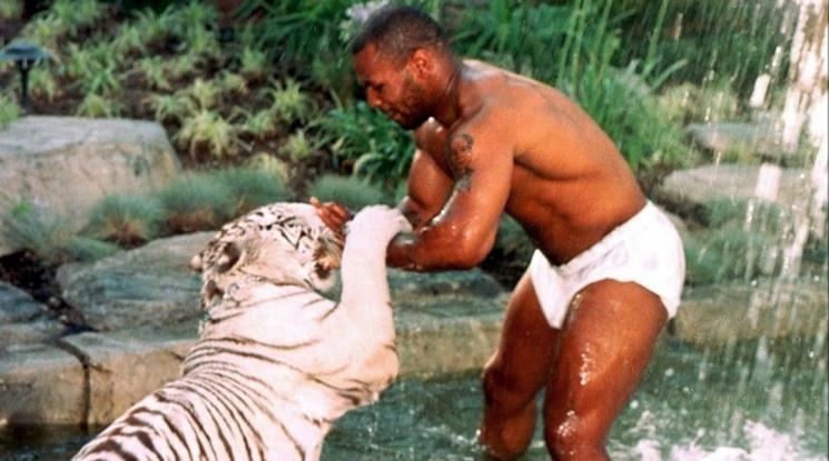Един от тигрите на Майк Тайсън разкъсал ръката на жена