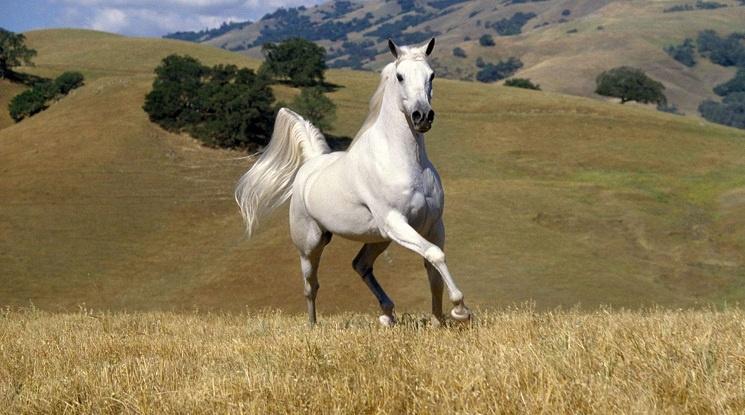 Боби Михайлов се завърна на бял кон в БФС! Отново ще управлява футбола ни